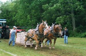 horse_pull